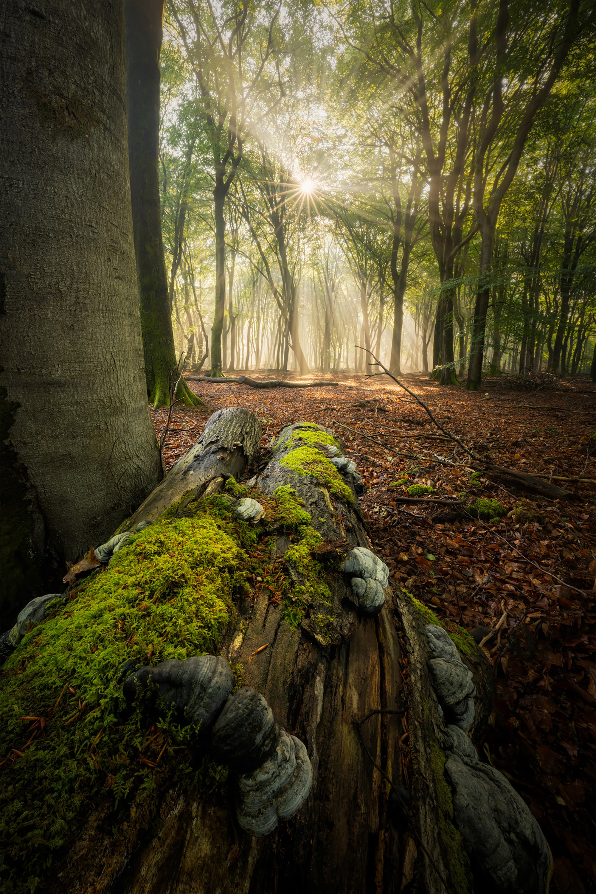 albert dros sony alpha 7RM4 a moss covered fallen tree in a forest in the netherlands