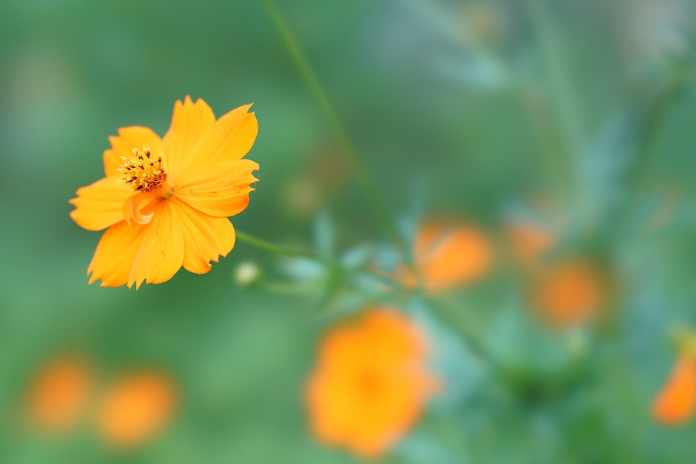 Sclose-up-yellow-flower-alpha-7RII